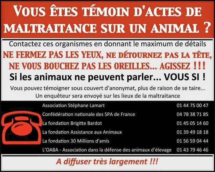 Si vous étes témoin d'actes de maltraitances sur un animal.... 11846510