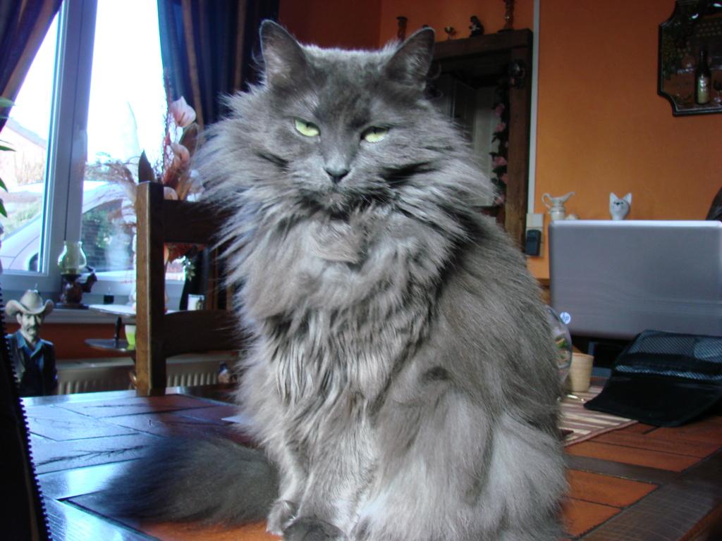 Si vous aimez les chats Dsc03510