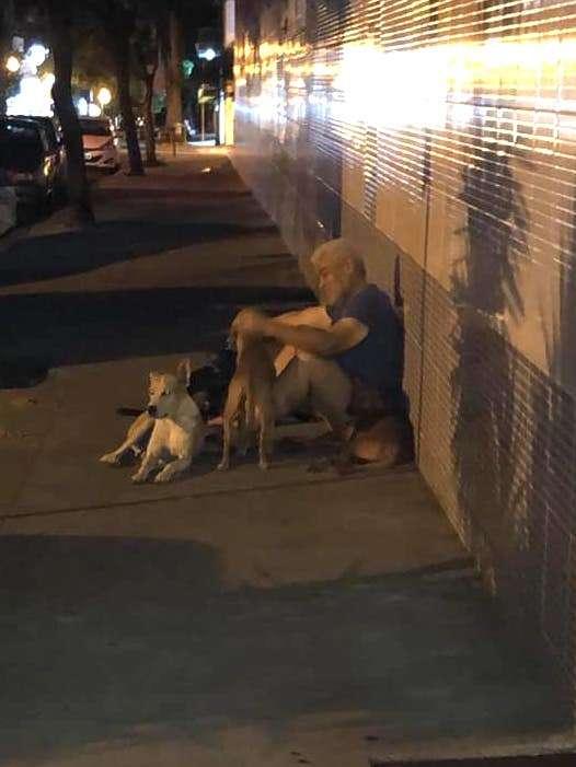 Six chiens ont refusé d'abandonner Luis, leur maître sans-abri Luis-c10