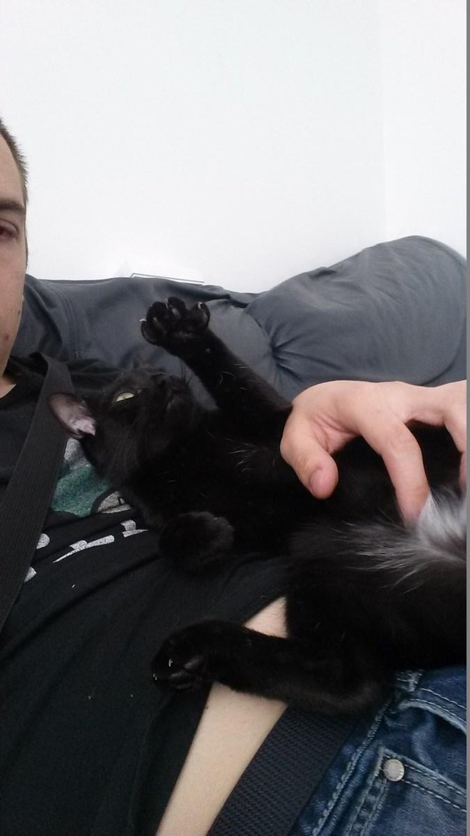 joliot - JOLIOT, chaton européen robe noire, né le 08/09/14 20150511