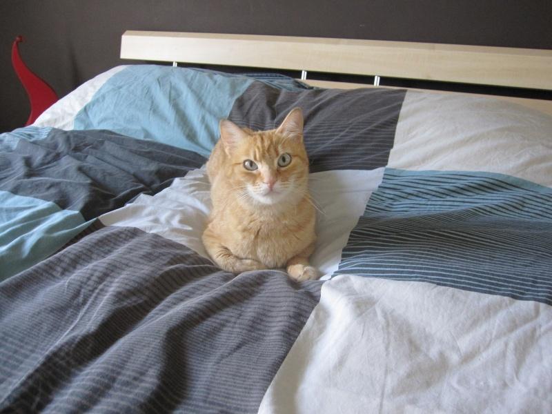 joris - JORIS, chat européen tigré roux, né en mars 2014 Img_1211