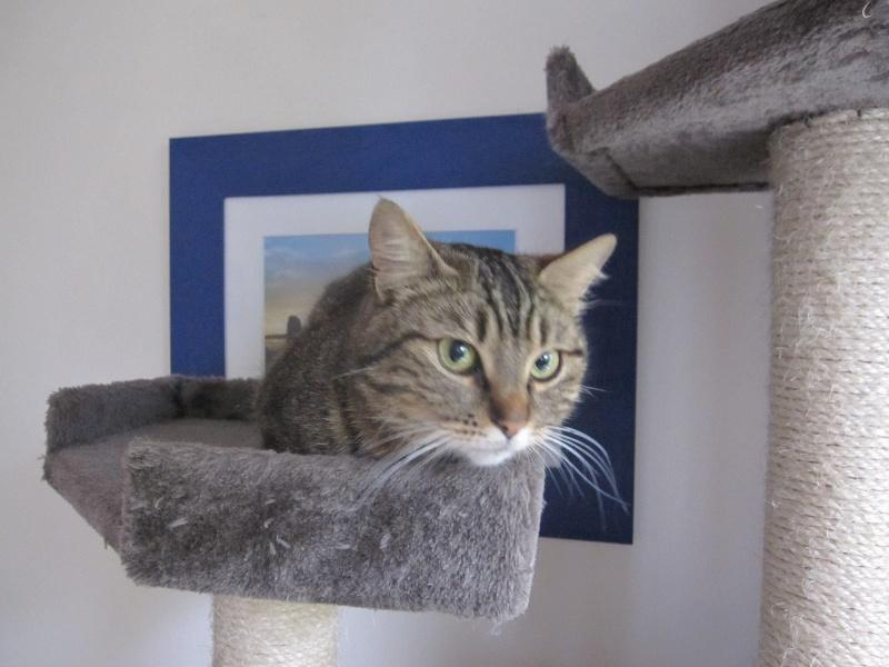 JALANE, chatte européenne tigrée, née en mars 2014 Img_1233