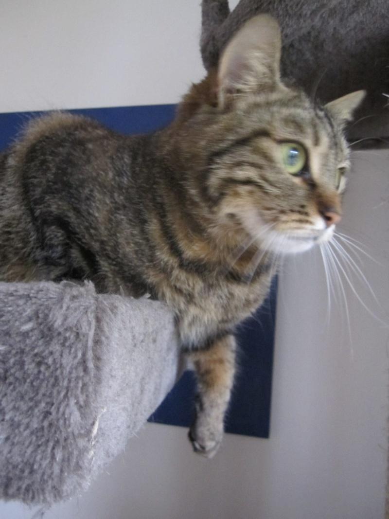 JALANE, chatte européenne tigrée, née en mars 2014 Img_1234