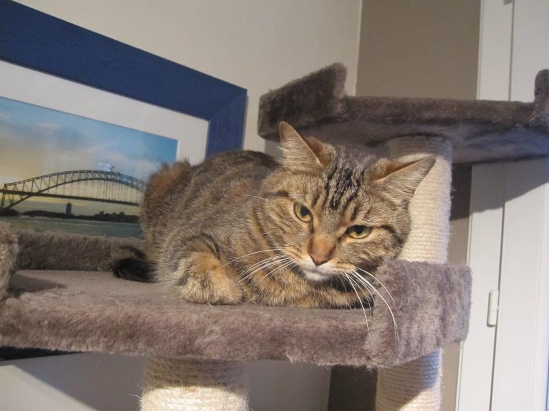 JALANE, chatte européenne tigrée, née en mars 2014 Img_1236