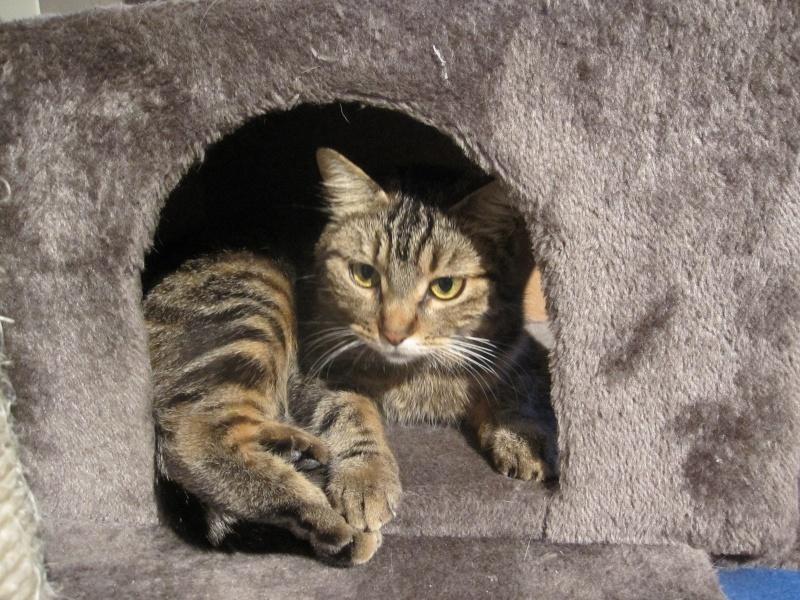 JALANE, chatte européenne tigrée, née en mars 2014 Img_1237