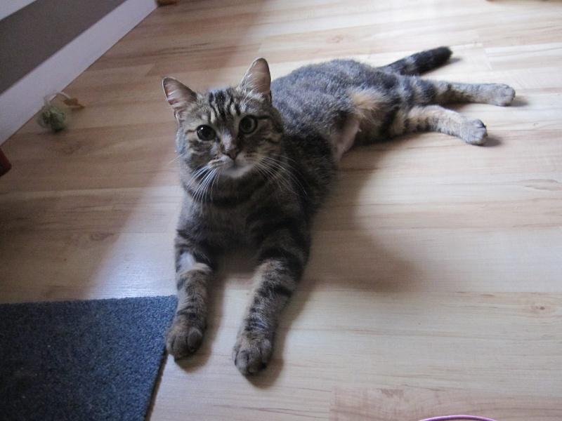 JALANE, chatte européenne tigrée, née en mars 2014 Img_1241