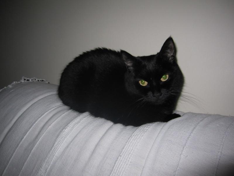 extra petite chatte noire