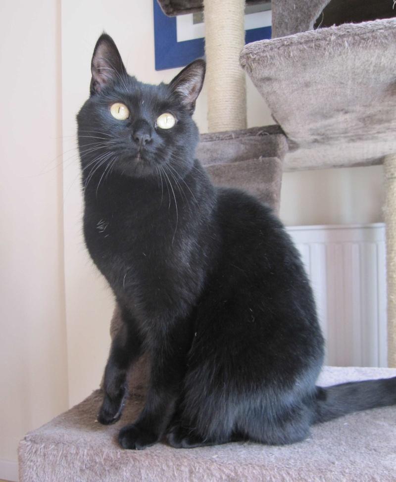 Hania, chatte européenne noire, née en septembre 2012 Img_1530
