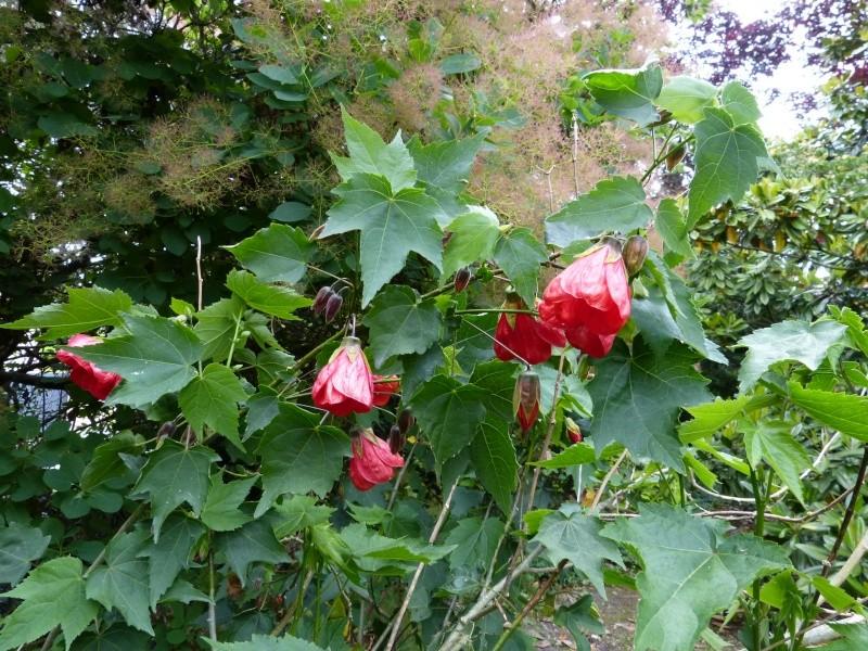 le joli mois de mai des fous jardiniers - Page 8 Abutil16
