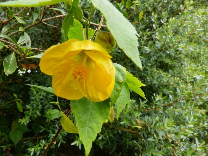 le joli mois de mai des fous jardiniers - Page 8 Abutil17