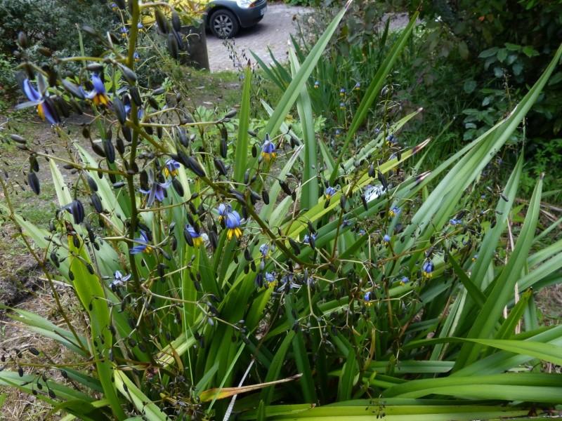 le joli mois de mai des fous jardiniers - Page 7 Dianel10