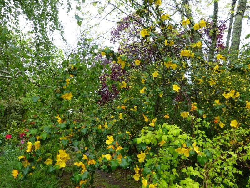 le joli mois de mai des fous jardiniers Fremon13