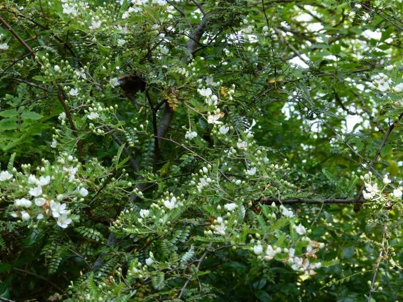le joli mois de mai des fous jardiniers - Page 8 Osteom15