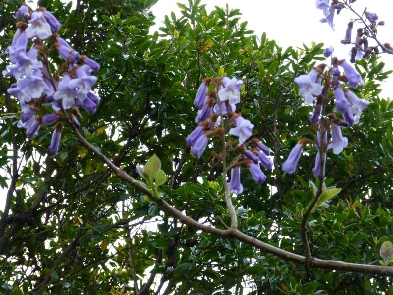 le joli mois de mai des fous jardiniers Paulow10
