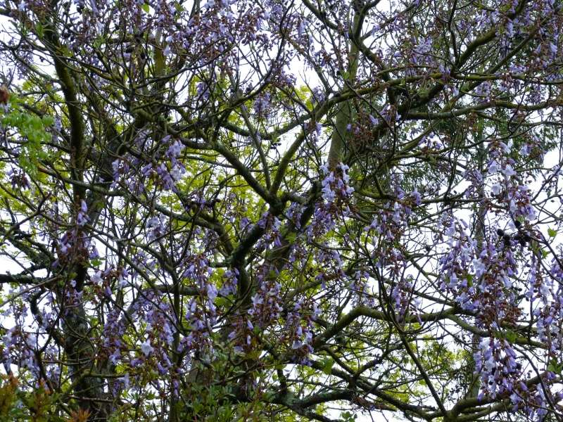 le joli mois de mai des fous jardiniers Paulow11