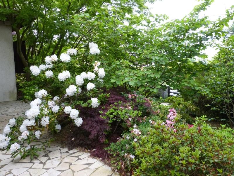 Rhododendron - espèces, variétés, floraisons - Page 6 Rhodo123