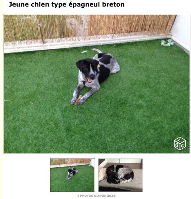 Nous abandonnons notre chien idéal Captur10