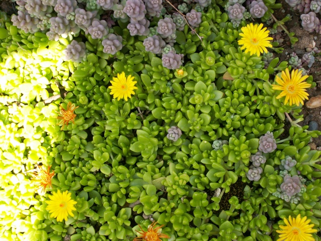 le joli mois de mai des fous jardiniers - Page 6 Delosp10