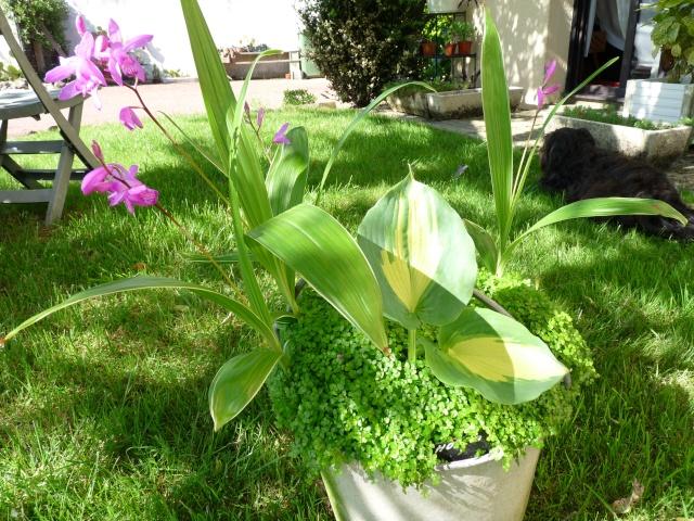 le joli mois de mai des fous jardiniers - Page 7 P1020010