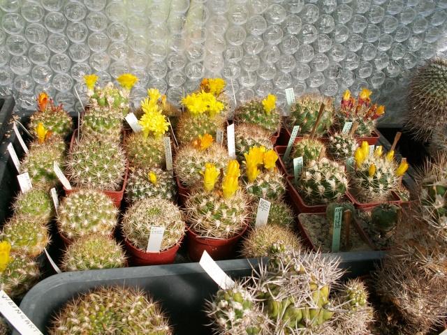 le joli mois de mai des fous jardiniers Pict0017