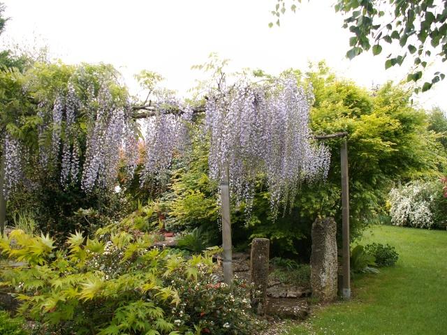 le joli mois de mai des fous jardiniers - Page 4 Wister10
