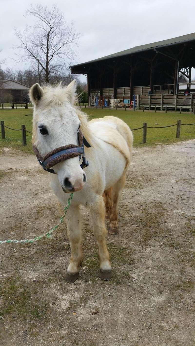 FRIPON - Welsh Pony né en 1993 - adopté en juillet 2015 par Claire Fripon18