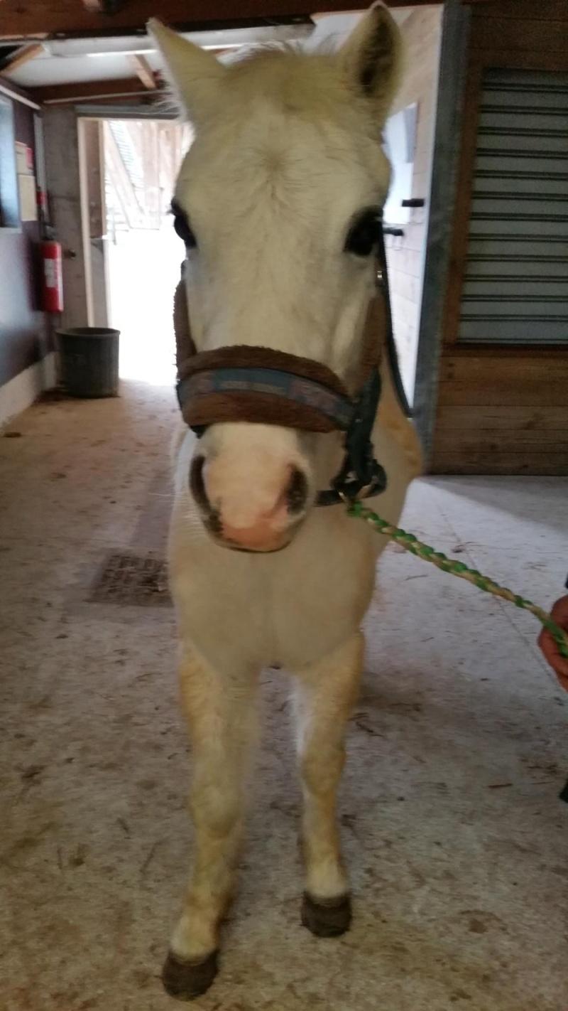 FRIPON - Welsh Pony né en 1993 - adopté en juillet 2015 par Claire Fripon22