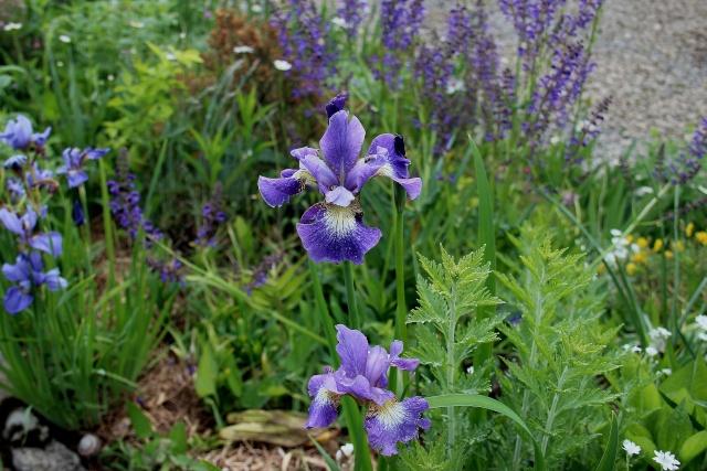 Iris 2015 - Page 2 Bleu_c10