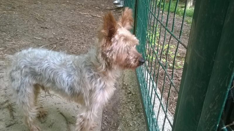 SOPRANO (chien) Wp_20195