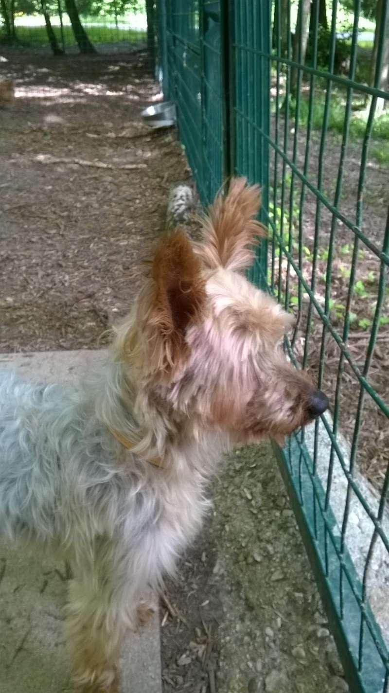 SOPRANO (chien) Wp_20196