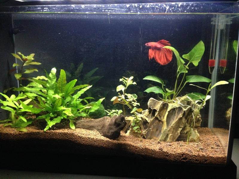 Aquarium de Jean michel !  Jean_m10