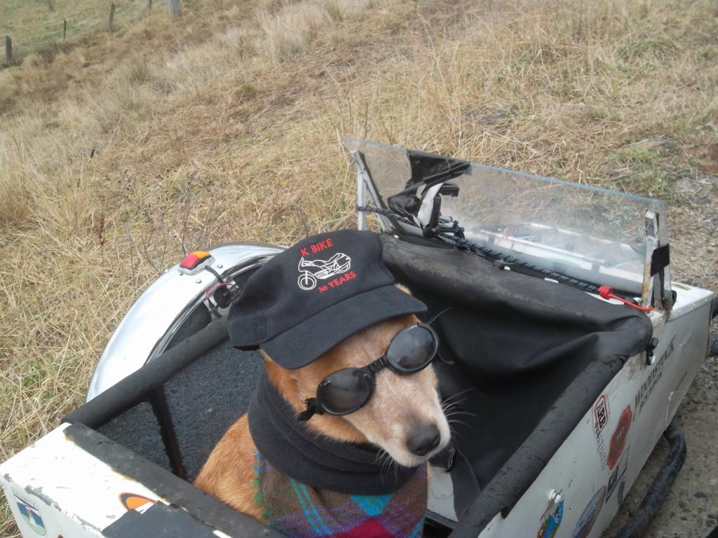 Bella the Red Cattle Dog Sam_3210