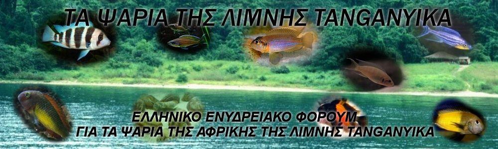 ΤΑ ΨΑΡΙΑ ΤΗΣ ΛΙΜΝΗΣ TANGANYIKA Tangan12