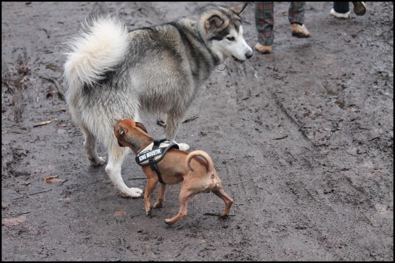 Gestion des déplacements  des autres chiens Image114