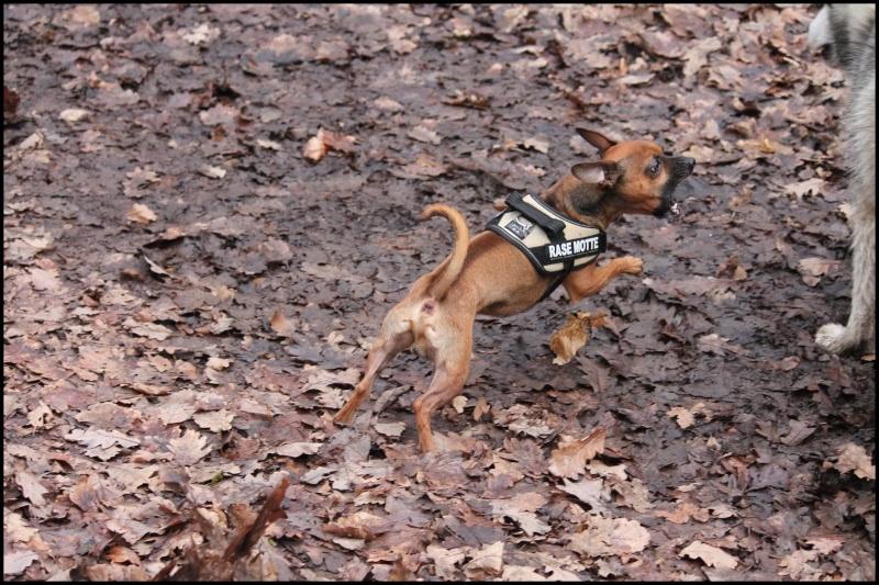 Gestion des déplacements  des autres chiens Image115