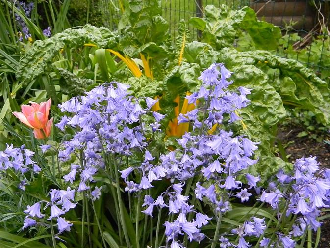 le joli mois de mai des fous jardiniers - Page 3 Fou410