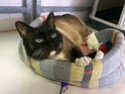 Free forum : RESCUE CATS - Portail Icko10