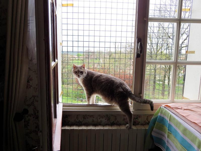 Gentil chat cherche panier retraite pour finir sa petite vie /15 - Page 4 Img_0310