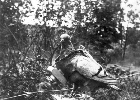 Les pigeons au combat . Bundes10