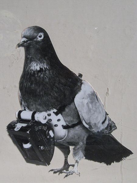 Les pigeons au combat . Drjuli10