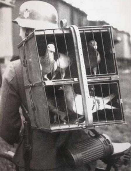 Les pigeons au combat . Small110