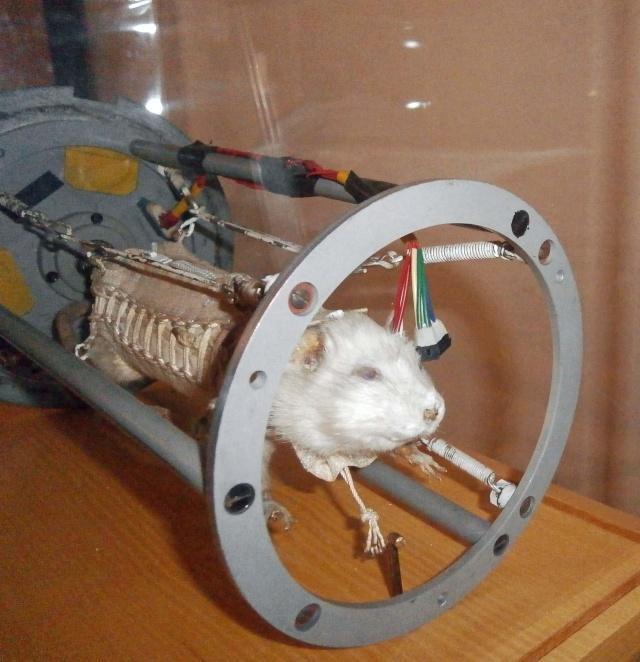 Le Musée du Service de Santé des Armées et le rat hector P5060510