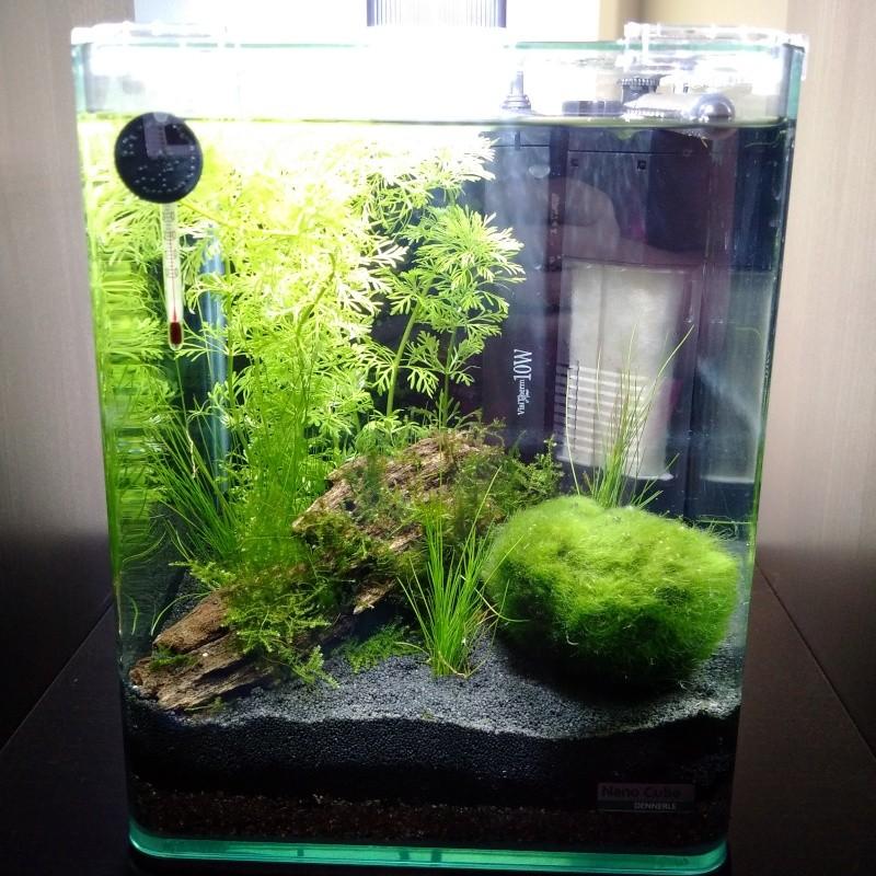 Mon premier nano aquarium Img_2010