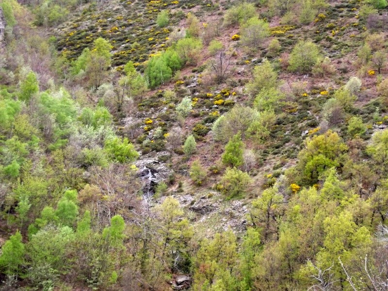 (07) Balade outre Massif Central - Ardèche Dscf6920