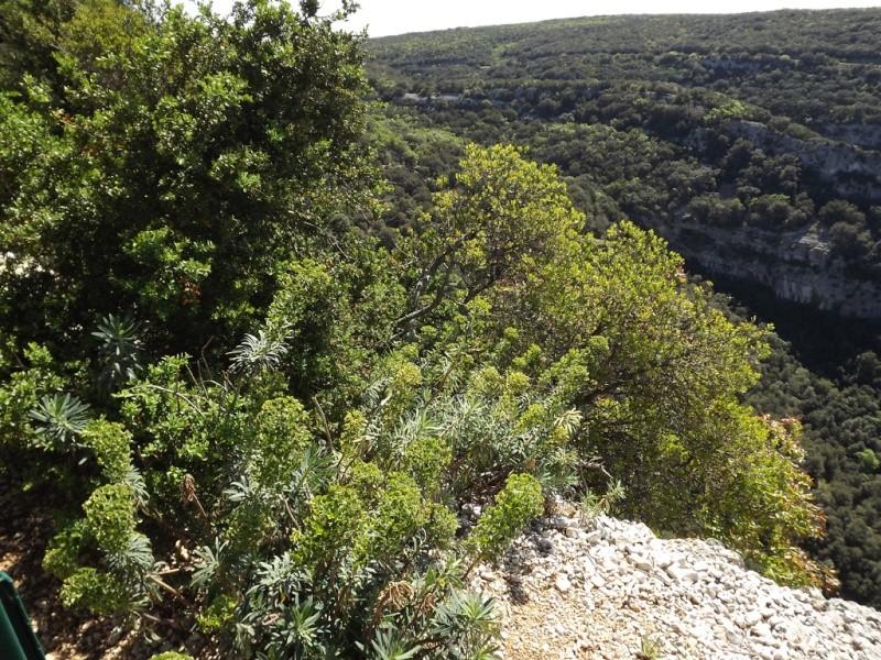 (07) Balade outre Massif Central - Ardèche Dscf6929