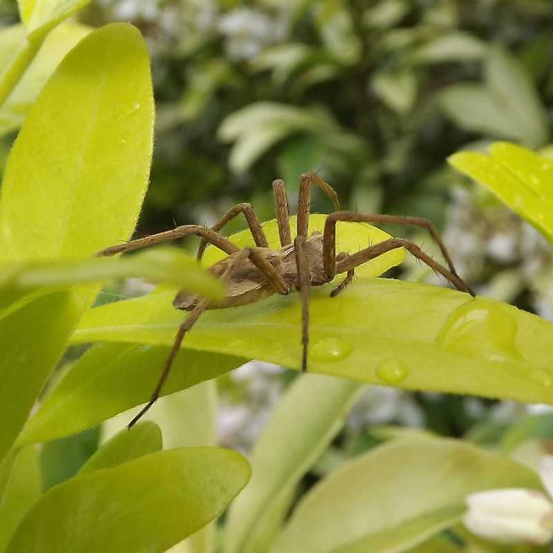 les 8 pattes - araignées et compagnie - Page 19 Dscf7013