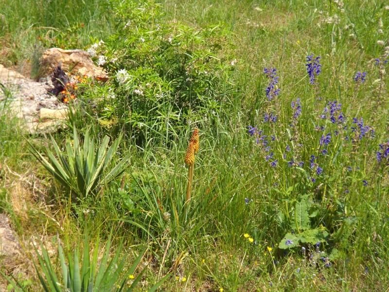 le joli mois de mai des fous jardiniers - Page 6 Dscf7212