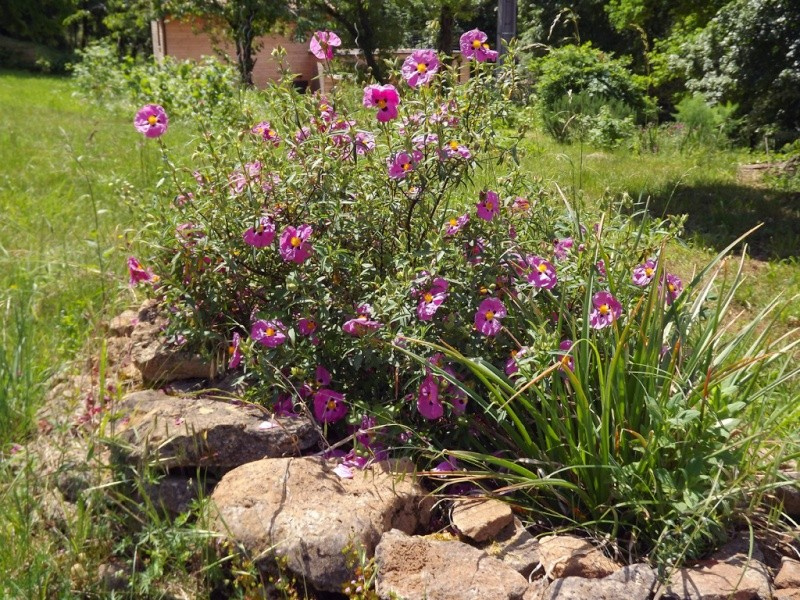le joli mois de mai des fous jardiniers - Page 6 Dscf7215