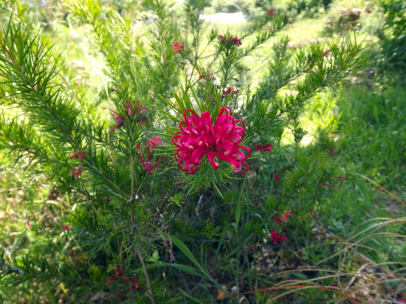 le joli mois de mai des fous jardiniers - Page 6 Dscf7216