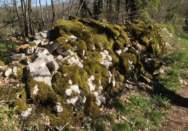 flore des vieux murs, rochers  et rocailles naturelles - Page 6 Img_1317